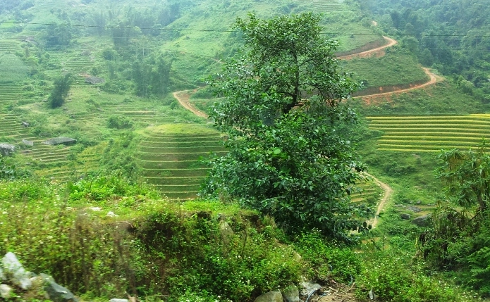 Sapa more photos for What does terrace farming mean
